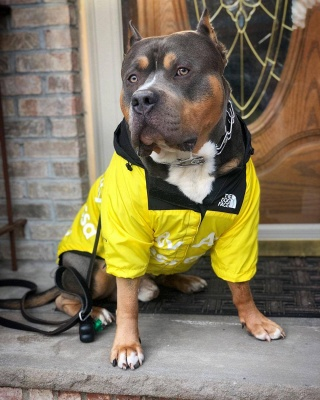 Dog Rain Poncho  for Small Medium Large Dogs_5