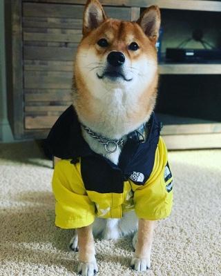 Dog Rain Poncho  for Small Medium Large Dogs_4