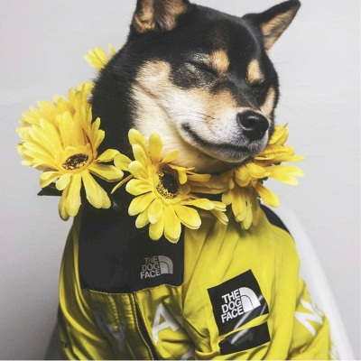 Dog Rain Poncho  for Small Medium Large Dogs_1