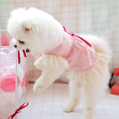 Spring And Summer uniformSspecial pet puppy T-shirt short skirt fashion clothes dog clothes pet dog clothes_5