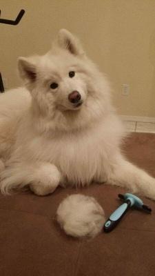 Grooming Brush For Dog & Cat Deshedding Rake Comb Hair Fur Remover_5