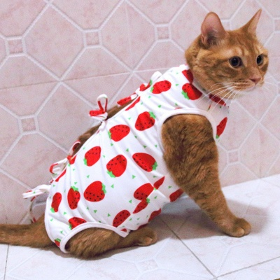 Cat Sterilization Clothing Cat Weaning Clothing Anti-bite Anti-pet Breathable_2