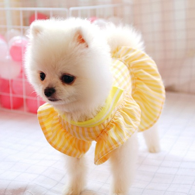 Yellow Stripe Short Sleeve Girl Dog Skirt With Collar_4