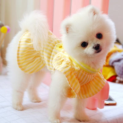 Yellow Stripe Short Sleeve Girl Dog Skirt With Collar