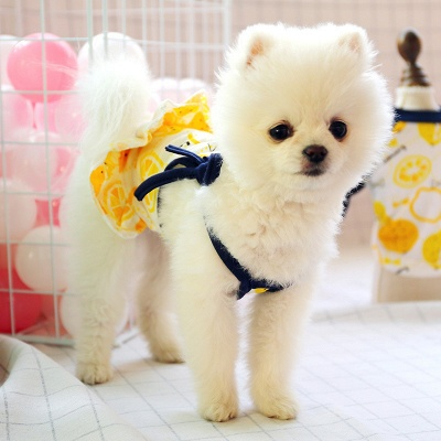 Straps  Ruffles Pet Vest  For Small Puppy_1