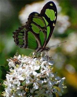 Green Butterflies on Flowers – Flowers Paint By Number_2